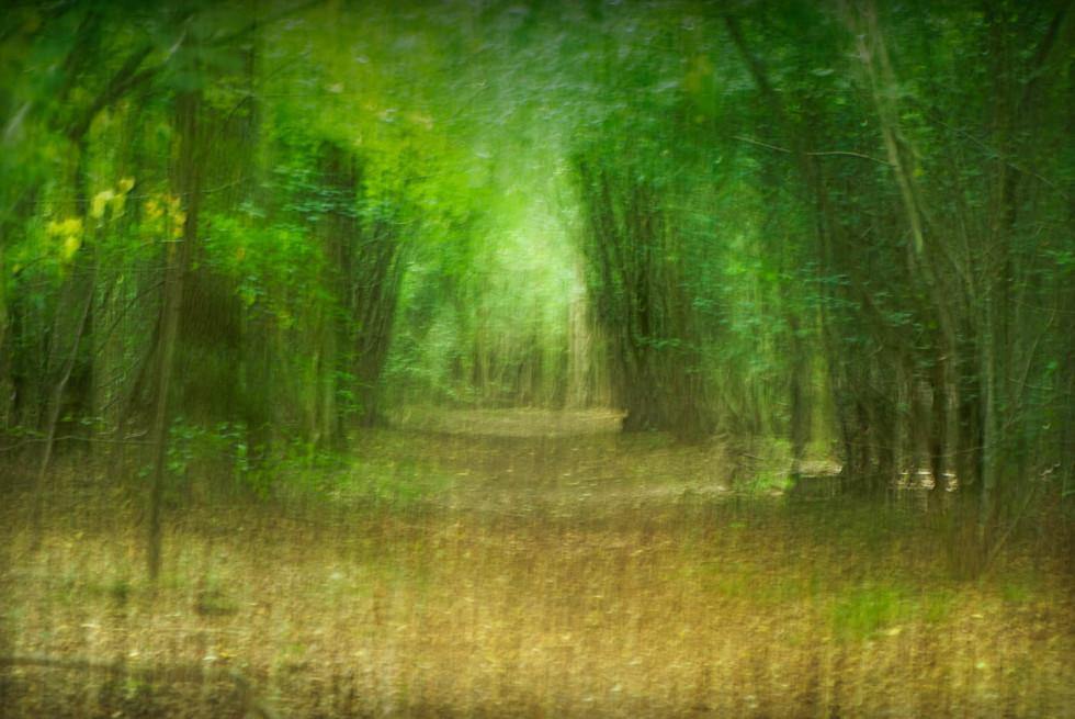 Chalkney Woods