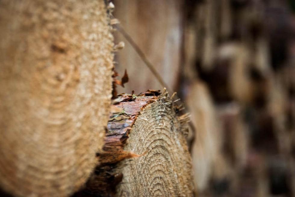 Cut Pine Logs