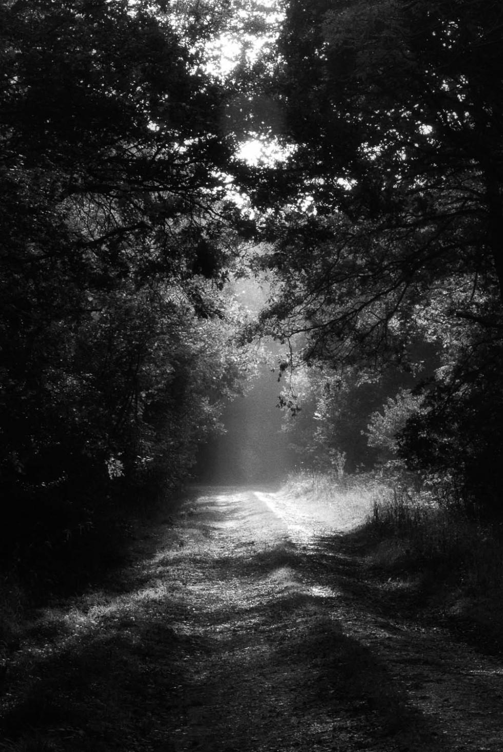 Misty Rowney Woods