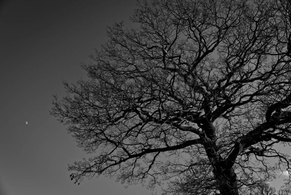 Tree and Moon, black and white