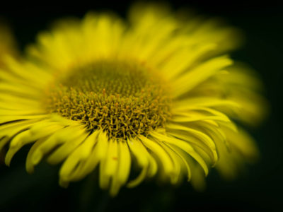 Wild Flowers in Dunmow Cutting
