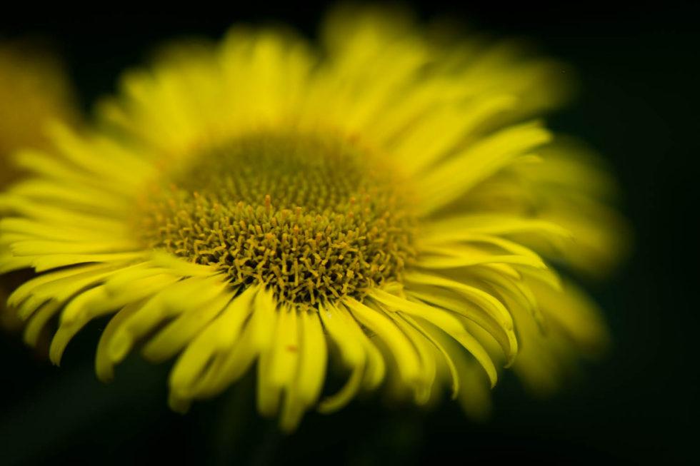 A Wild Flower
