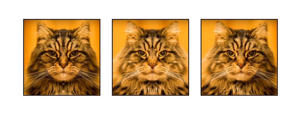 Elijah Asymmetric Triptych