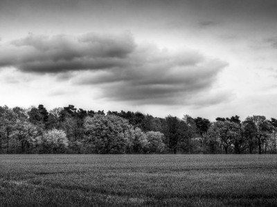 107/365v2 Rowney Woods in Black and White