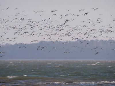 314/365v2 A Flock of Seagulls