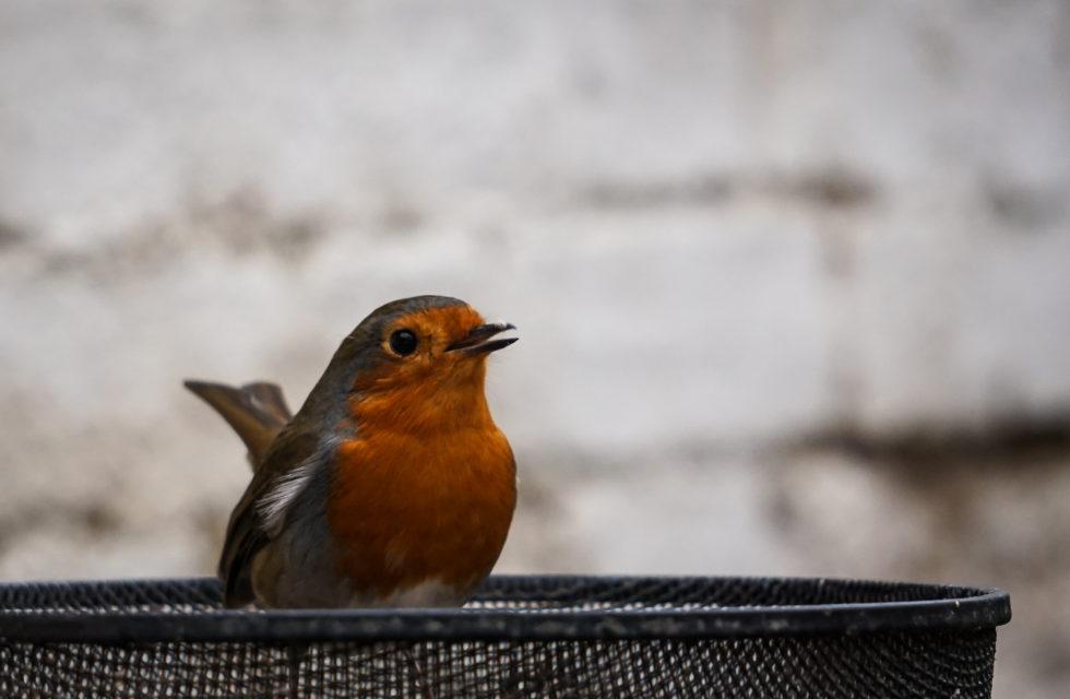 115-365v3 - Mr Robin Says