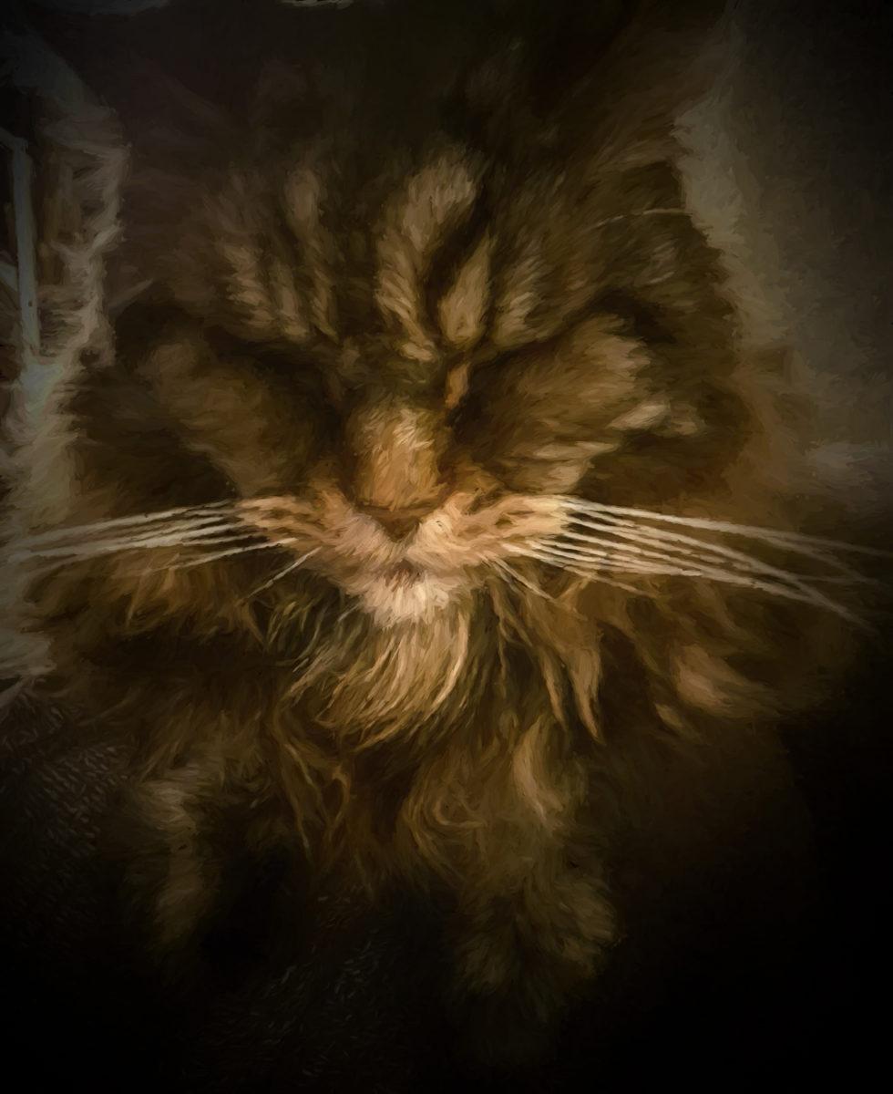 93-365v3-sleepy-grumpy-cat