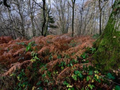 102/365v3 Bracken and Moss