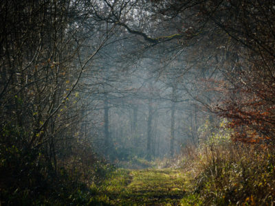 144/365v3 – Misty Trees in Rowney Woods