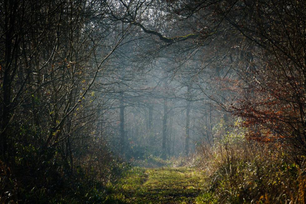 144-365v3 - MIisty Trees in Rowney Woods