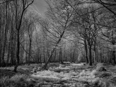 207/365v3 Broxbourne Woods