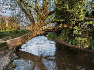 214/365v3 Tree over the River Chelmer