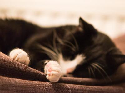 248/365v3 – Sleepy Paws