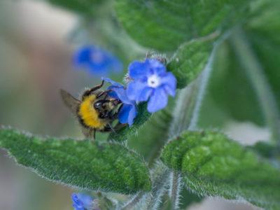 263/365v3 – Busy Bee